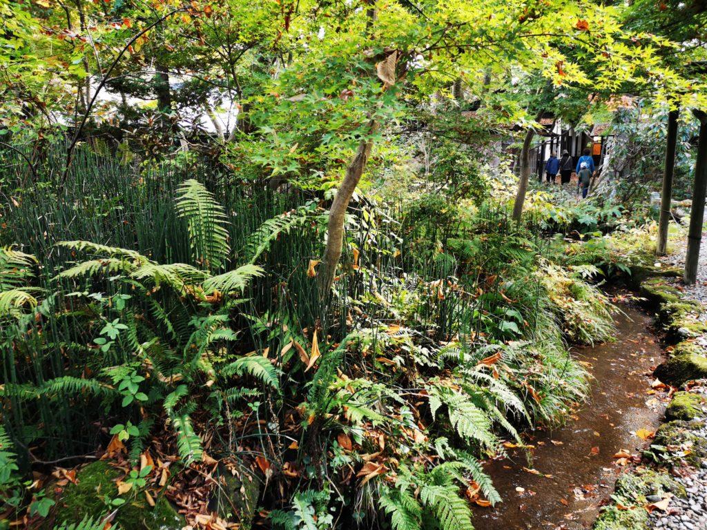 青柳家の庭