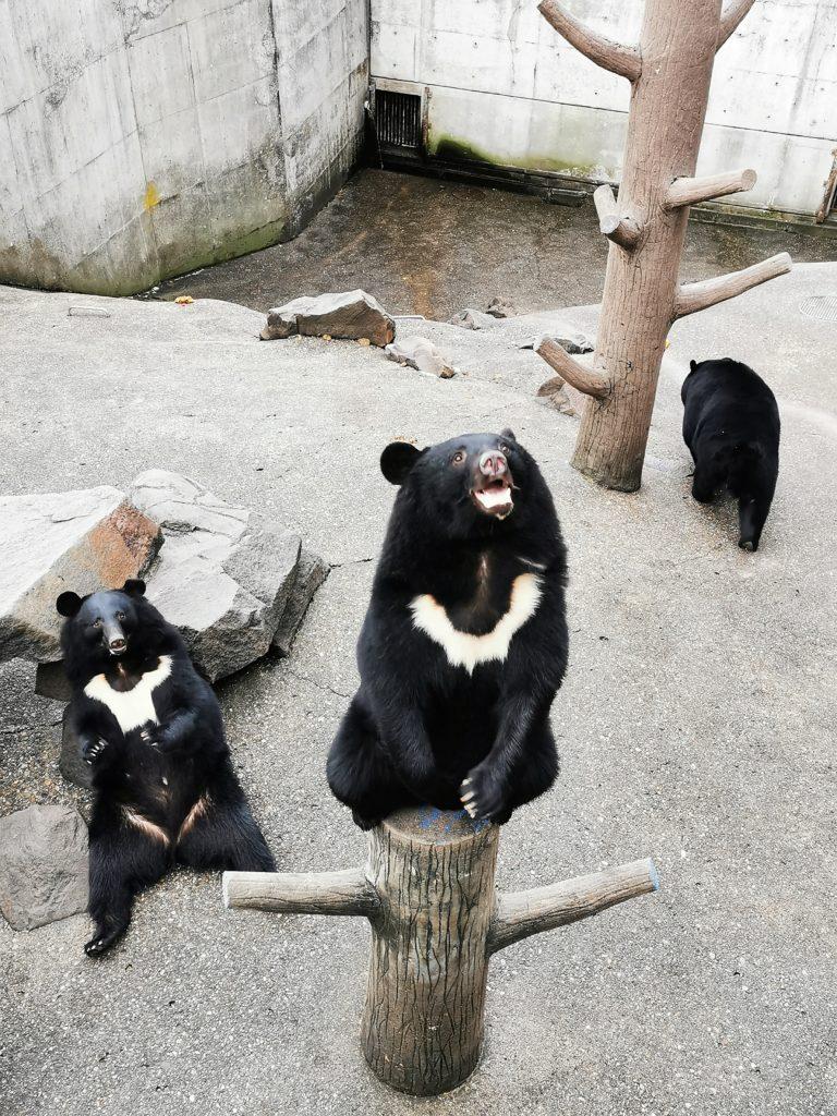 餌をねだるクマ