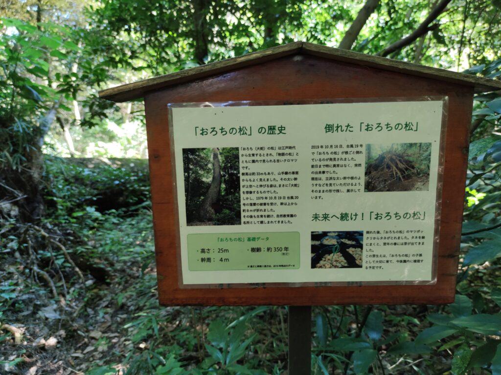 国立博物館附属自然教育園おろちの松